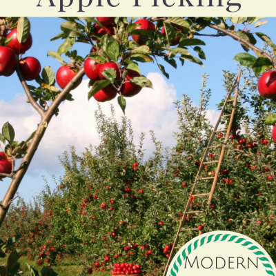 Perfect Fun Fall Family Activity: Apple Picking