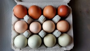 chickens, eggs, too many eggs, hatch eggs, what to do with eggs, laying eggs, egg recipes