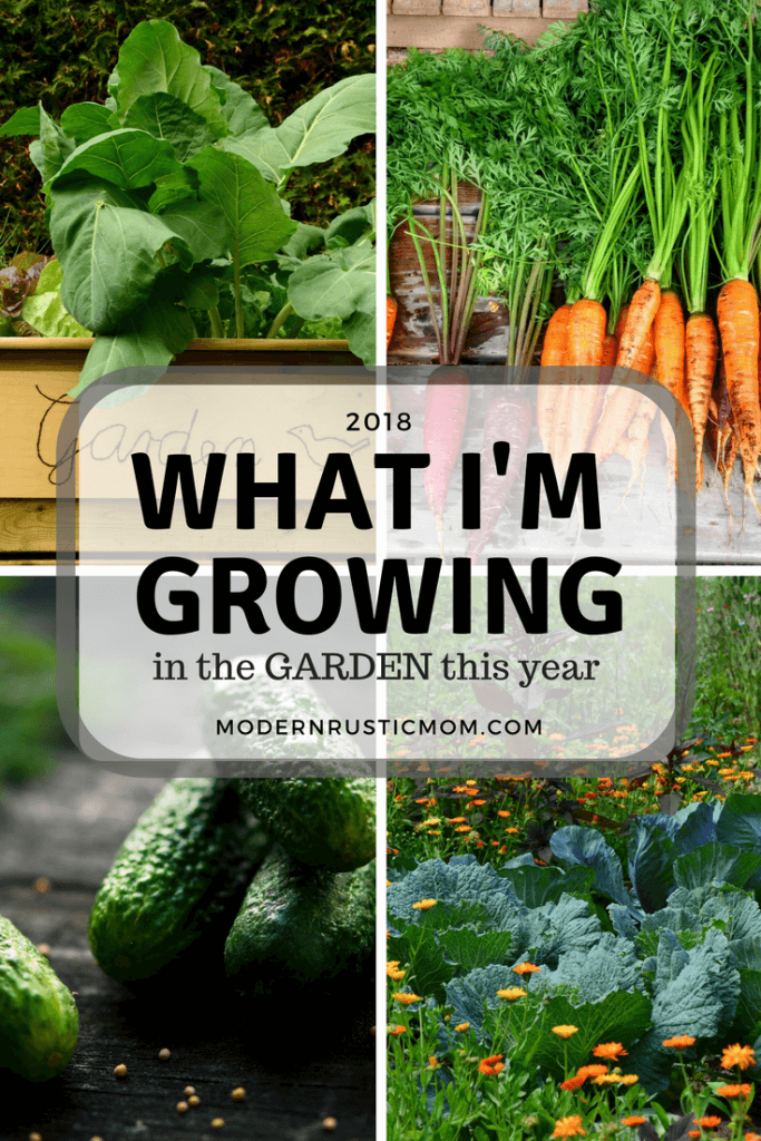 vegetables, carrots, cucumbers, starting a garden