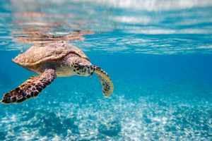 turtle, marine life, reduce plastic, reduce pollution