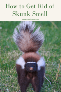How to Get Rid of Skunk Smell - Modern Rustic Mom