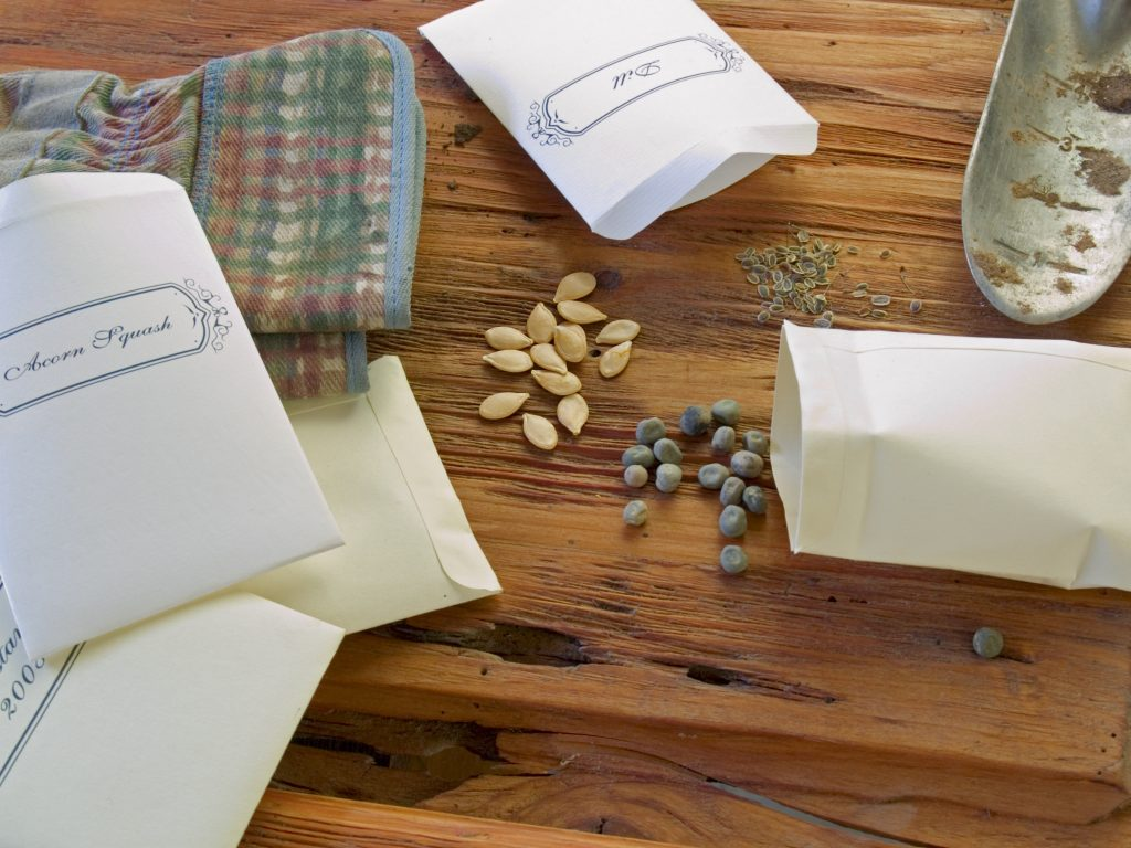 seeds from seed packets on table with garden gloves and trowel