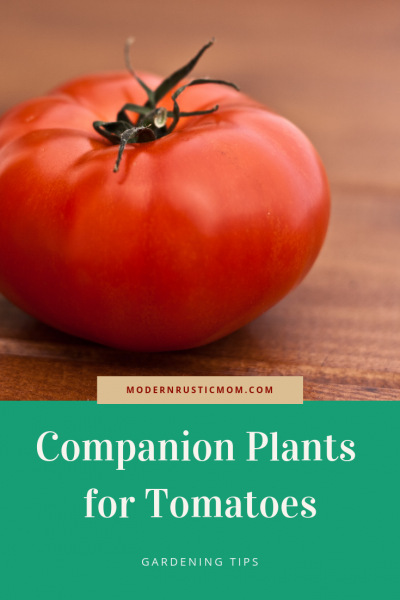 red juicy tomato on wooden background, companion plants for tomatoes